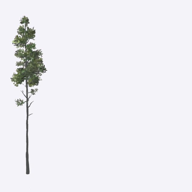 thumb_treefalling